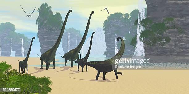 A Mamenchisaurus dinosaur herd grazing along a lake.