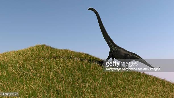 Mamenchisaurus in an open field.