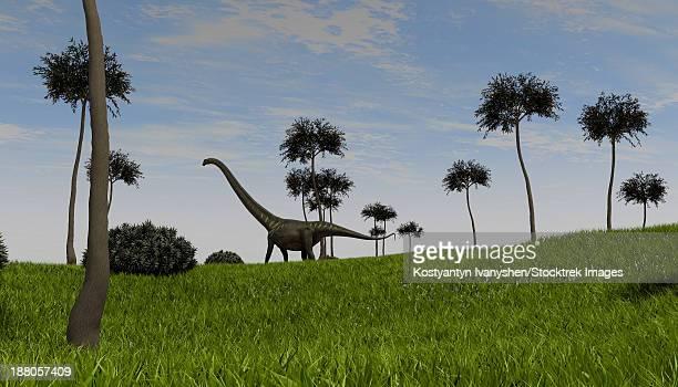 Mamenchisaurus walking across a grassy field.