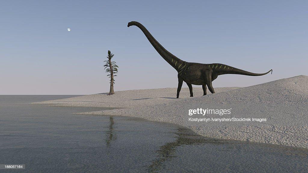 Mamenchisaurus walking along the shoreline. : Ilustración de stock