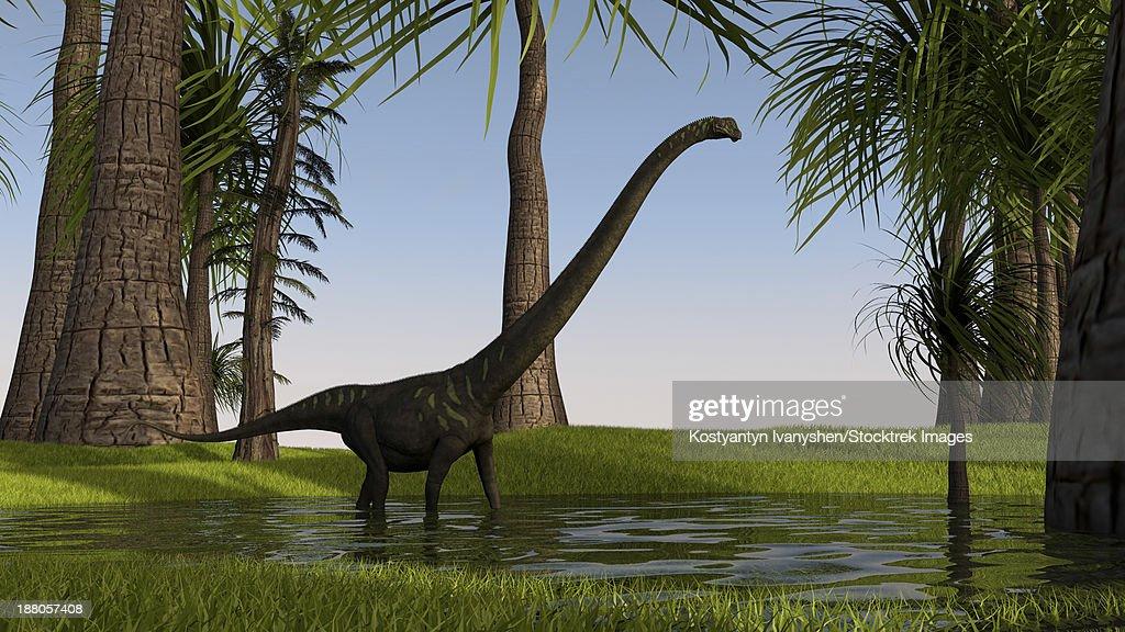 Mamenchisaurus walking through swampy water. : stock illustration