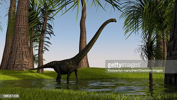 Mamenchisaurus walking through swampy water.