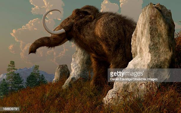 a mammoth standing among stones on a hillside. - paleozoology stock illustrations