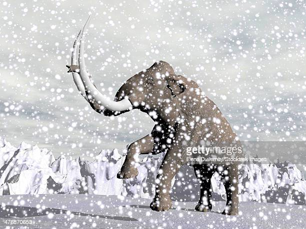 Mammoth walking through a blizzard on mountain.