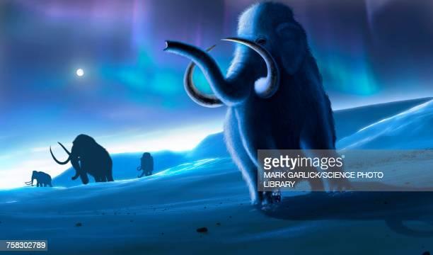 mammoths and aurora, illustration - aurora borealis stock illustrations