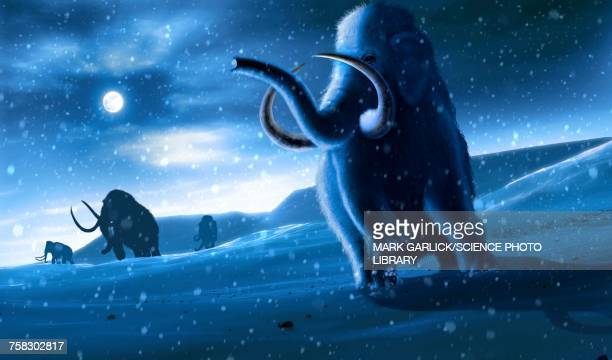 Mammoths and Snow, illustration