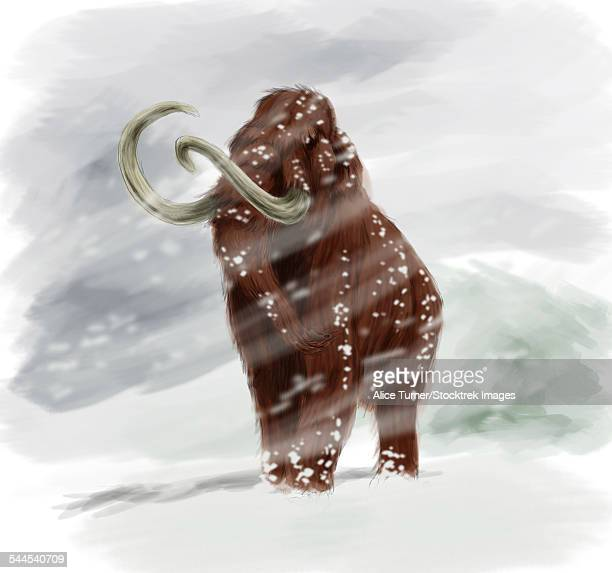 Mammuthus primigenius walking through a blizzard.