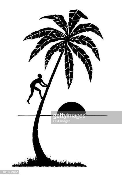 man climbing palm tree - pacific islands stock illustrations