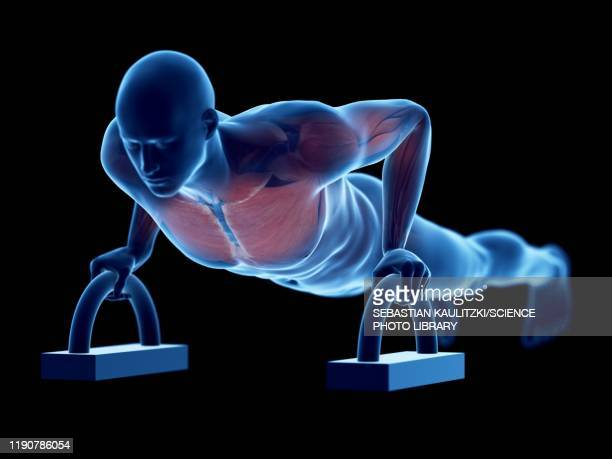 man doing push-ups, illustration - military stock illustrations