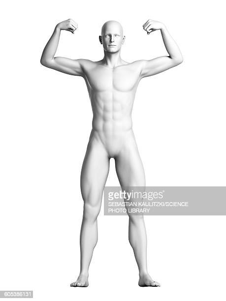 Man flexing his muscles, illustration