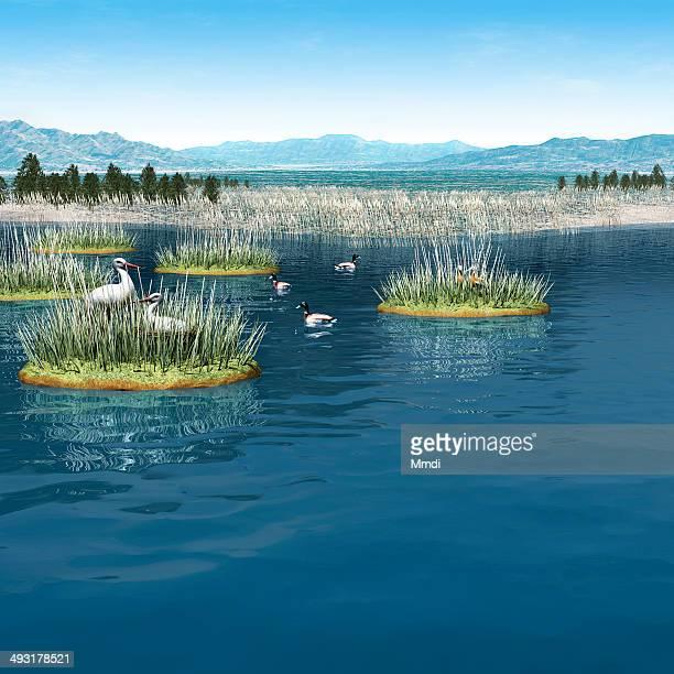 man made wetland - duck bird stock illustrations, clip art, cartoons, & icons