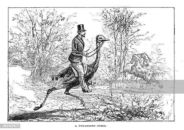 man riding ostrich - ostrich stock illustrations, clip art, cartoons, & icons