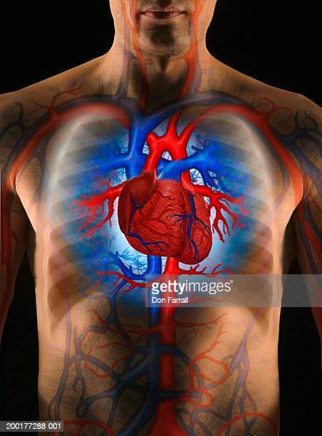 Man with enhanced cardiovascular system (Digital Composite)