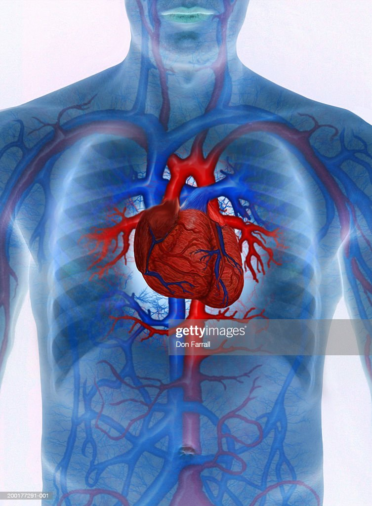 Man with enhanced cardiovascular system (Digital Composite) : stock illustration