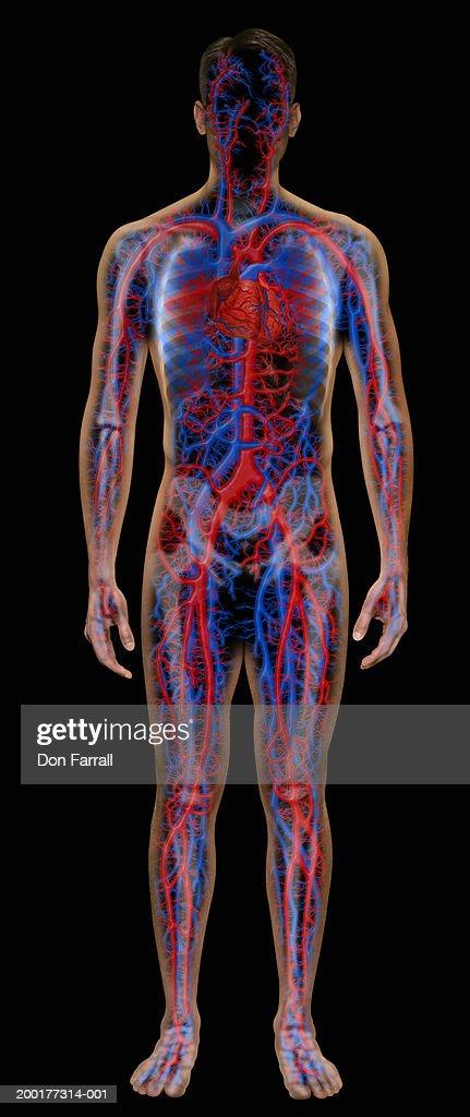 Man with enhanced vascular system (Digital Composite) : Stock Illustration