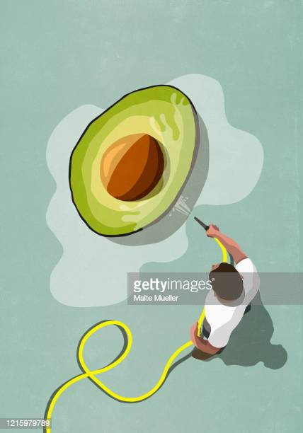 man with hose watering large avocado - freshness stock illustrations