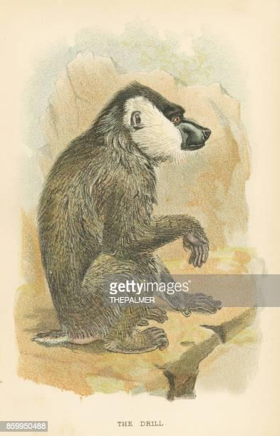 mandrill primate 1894 - mandrill stock illustrations, clip art, cartoons, & icons