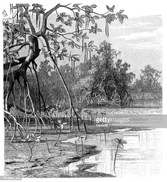 Mangrove is a shrub or small tree that grows in coastal saline or brackish water