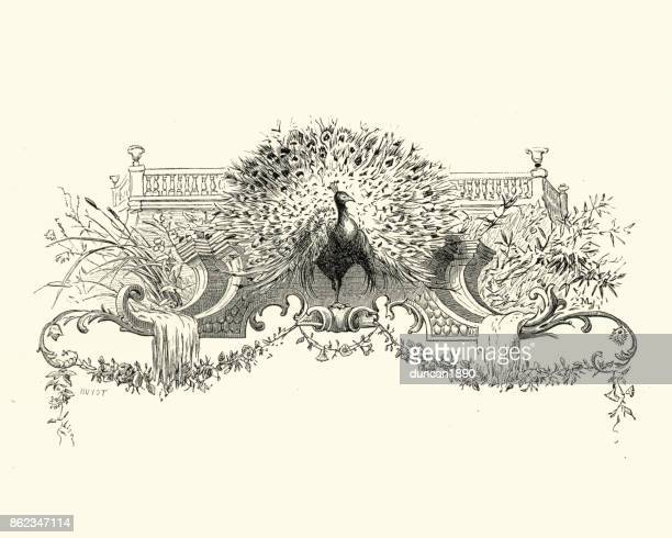 ilustrações, clipart, desenhos animados e ícones de manon lescaut - pavão - peahen