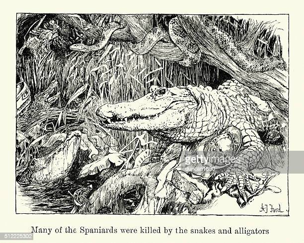 Many Spaniards were killed by the snakes and alligators
