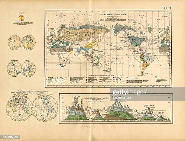 map of global distribution of plants, victorian botanical illustration - climate stock illustrations, clip art, cartoons, & icons