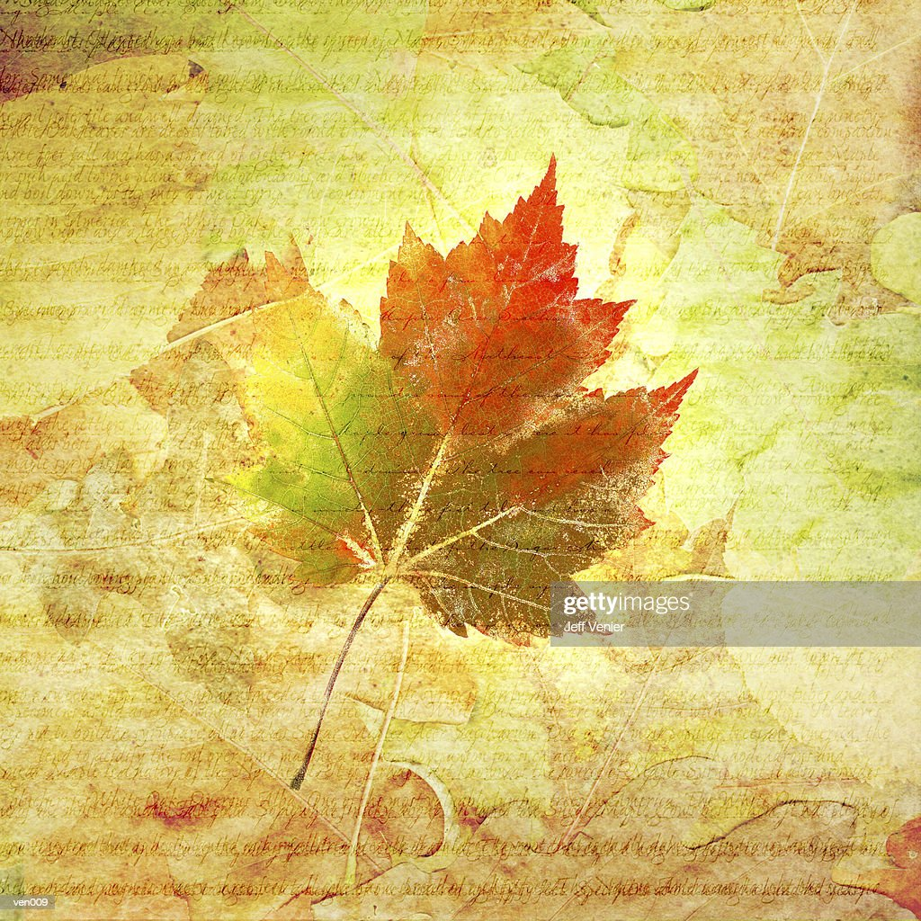 Maple Leaf on Background Text : Stock Illustration