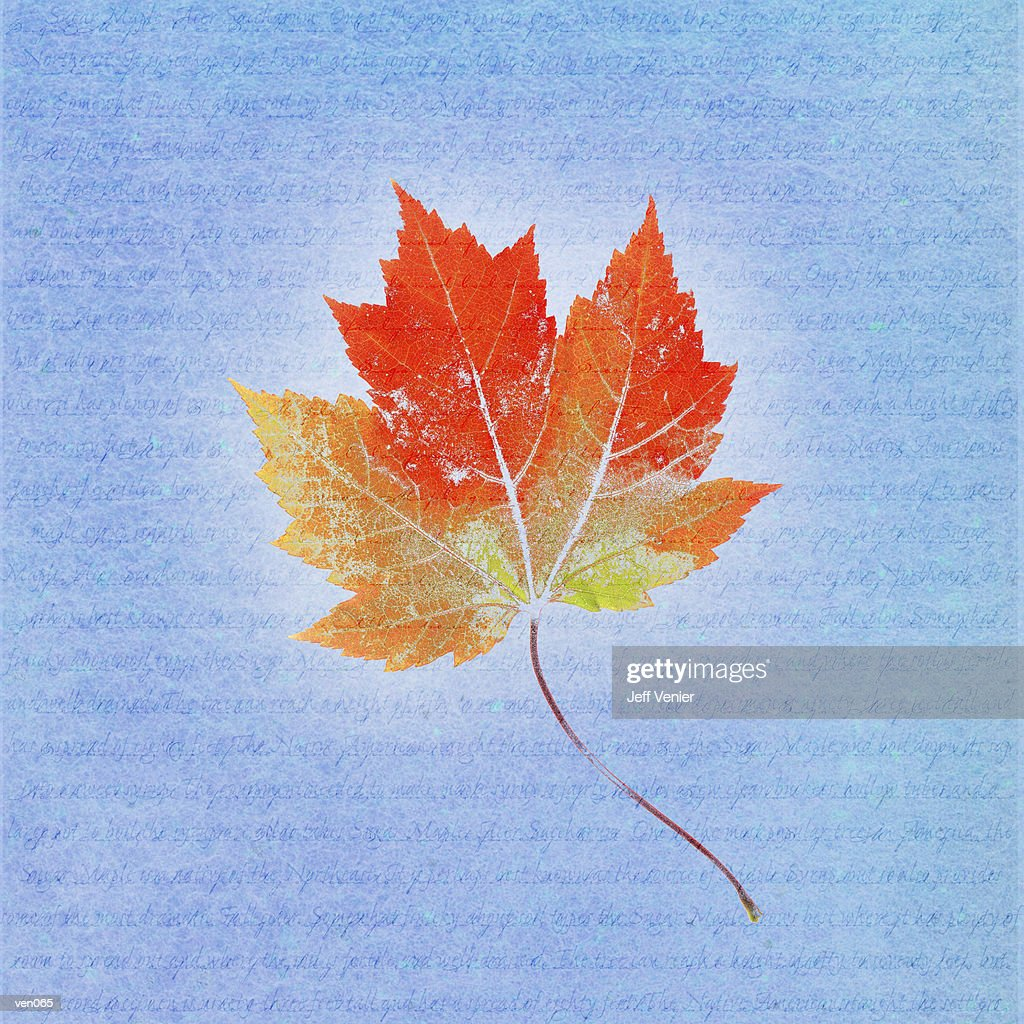 Maple Leaf on Descriptive Background : Stockillustraties
