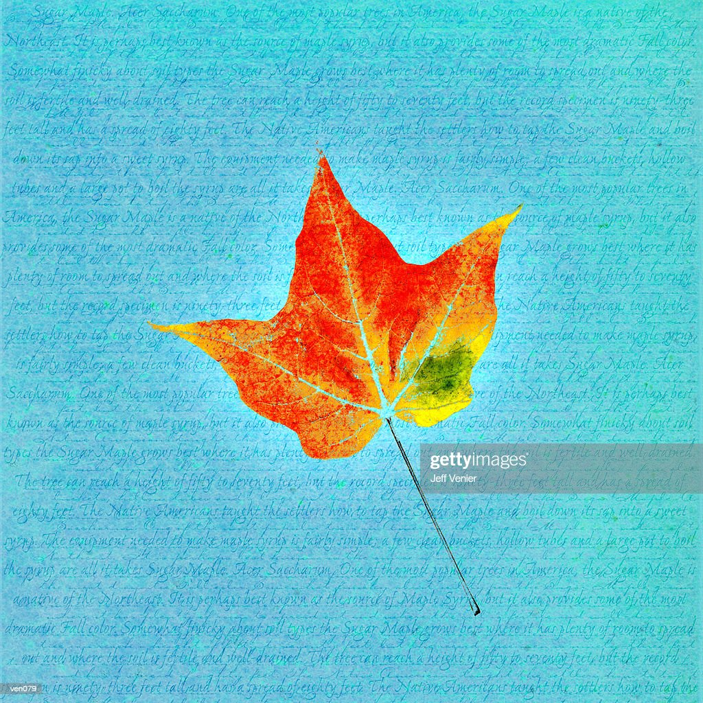 Maple Leaf on Descriptive Background : Stock Illustration