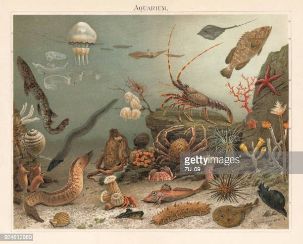 marine aquarium in the zoological station naples, litograph, published 1897 - naples italy stock illustrations