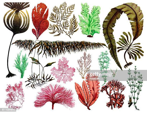 Marine plants, leaves and seaweed ,coral