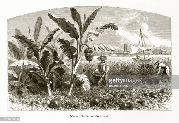 Market Garden on the Mississippi River, Louisiana, United States, American Victorian Engraving, 1872
