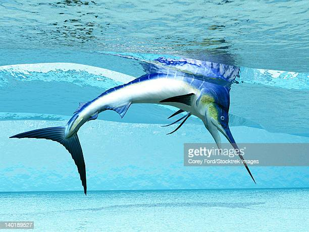 a marlin dives in shallow waves looking for fish to eat. - marlin stock illustrations, clip art, cartoons, & icons