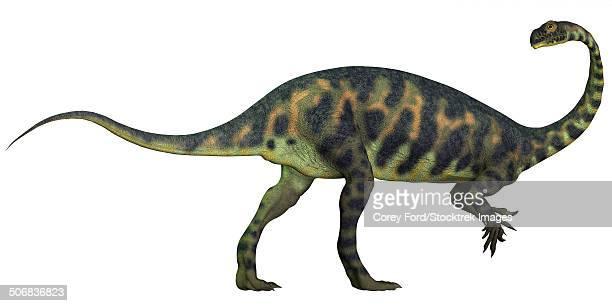 ilustraciones, imágenes clip art, dibujos animados e iconos de stock de massospondylus dinosaur fromt he jurassic age of africa. - paleozoología