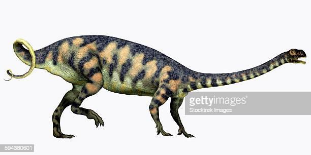 ilustraciones, imágenes clip art, dibujos animados e iconos de stock de massospondylus dinosaur. - paleozoología