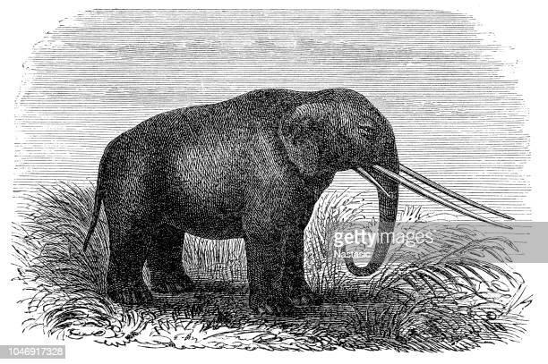 ilustraciones, imágenes clip art, dibujos animados e iconos de stock de mastodonte - animal extinto