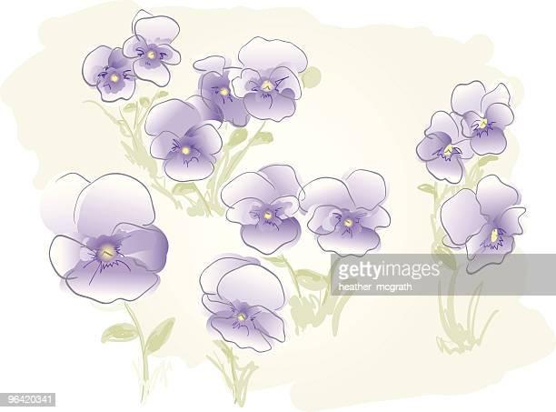 ilustrações, clipart, desenhos animados e ícones de meadow de violetas - fragilidade