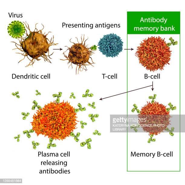 mechanisms of immune defence against viruses, illustration - antigen stock illustrations