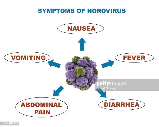 medical diagram showing symptoms of the norovirus. - diarrhea stock illustrations