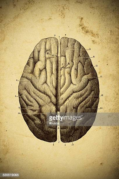 medical scientific illustration on yellow paper: brain top view - neurosurgery stock illustrations, clip art, cartoons, & icons