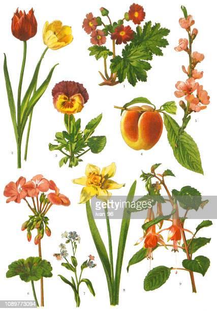 ilustrações de stock, clip art, desenhos animados e ícones de medicinal and herbal plants - litografia