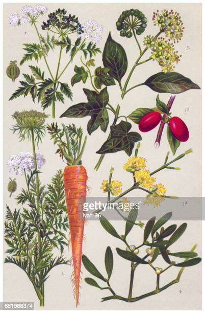 Medicinal and Herbal Plants