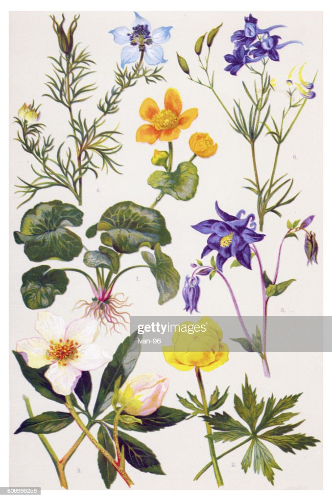 Medicinal and Herbal Plants : stock illustration