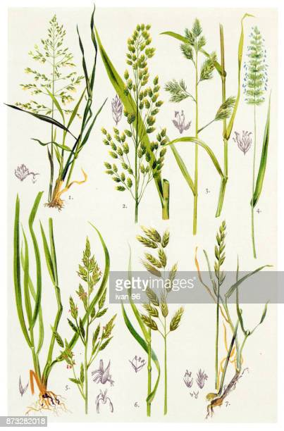 medicinal and herbal plants - perennial stock illustrations, clip art, cartoons, & icons