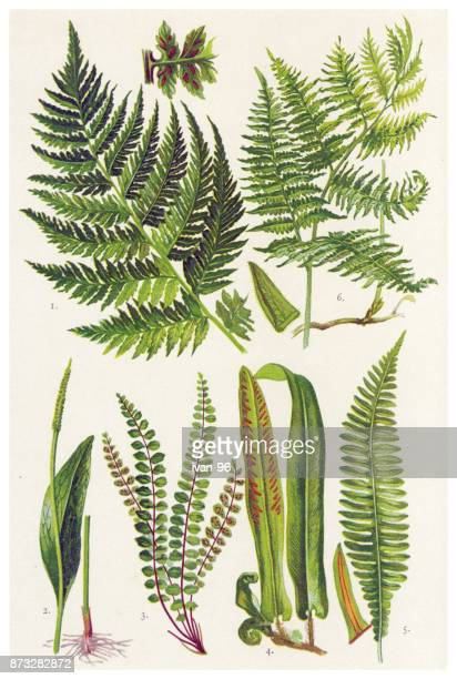 medicinal and herbal plants - plant bulb stock illustrations, clip art, cartoons, & icons