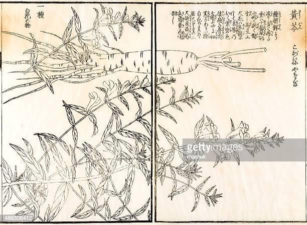 薬用植物、19 世紀の日本の植物イラストレーション - 漢方薬点のイラスト素材/クリップアート素材/マンガ素材/アイコン素材