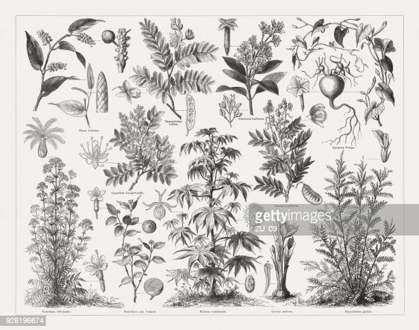 Medicinal plants, wood engravings, published in 1897