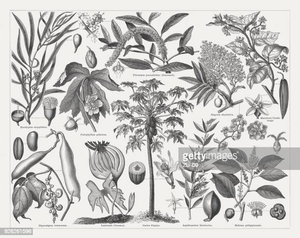 medicinal plants, wood engravings, published in 1897 - mint leaf culinary stock illustrations, clip art, cartoons, & icons