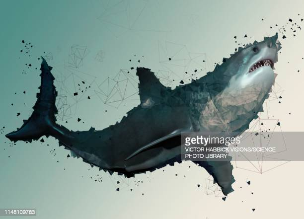 megalodon, illustration - low angle view stock illustrations