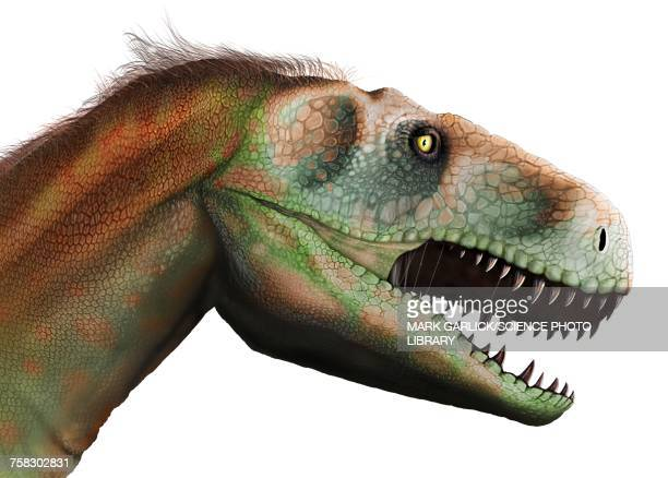 megalosaurus dinosaur, illustration - jurassic stock illustrations, clip art, cartoons, & icons