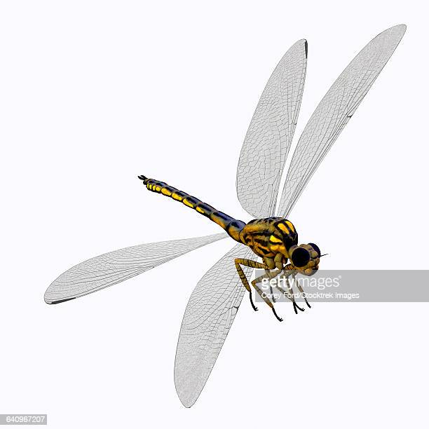 meganeura insect from the carboniferous period. - odonata stock illustrations, clip art, cartoons, & icons